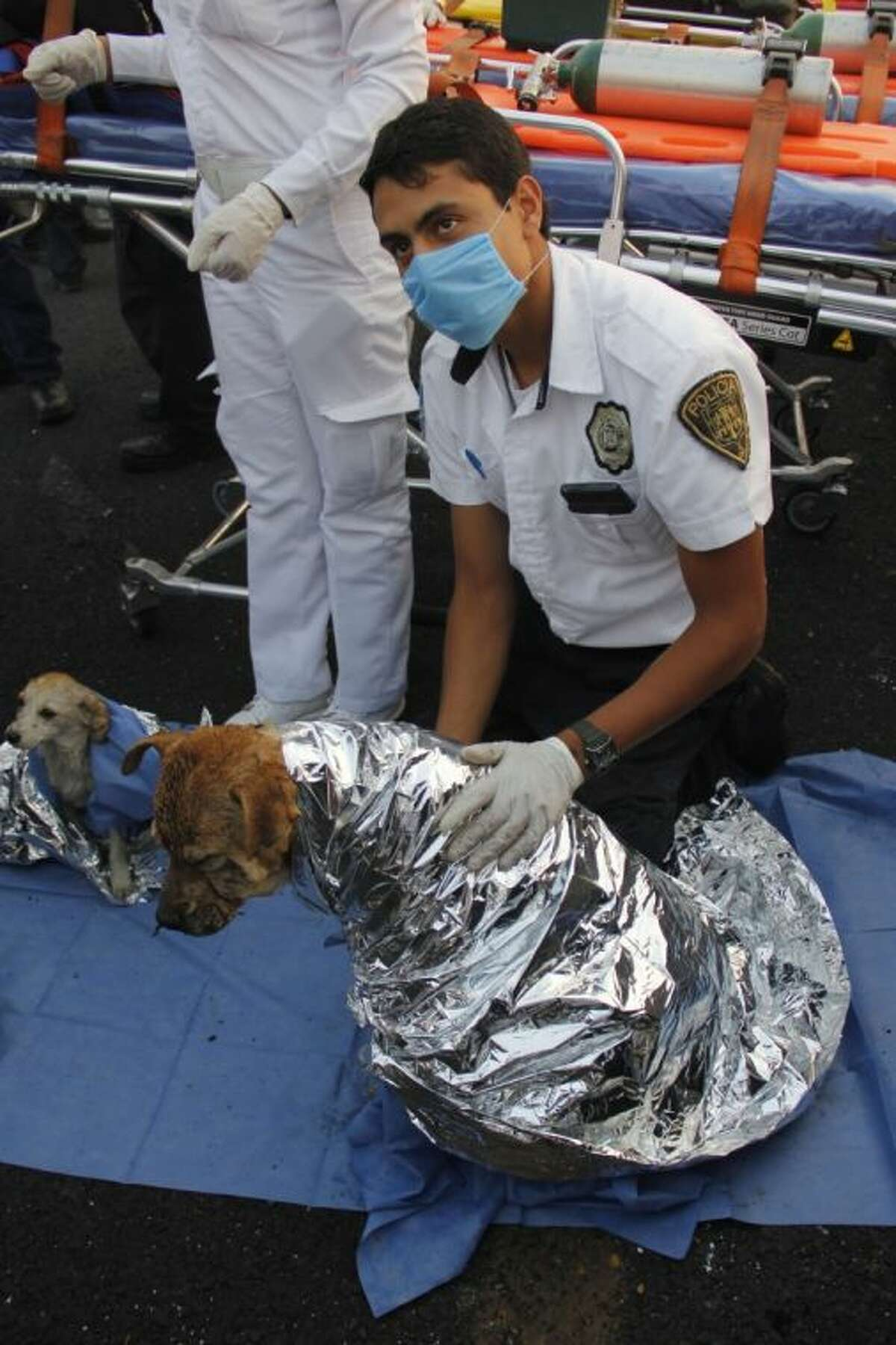 A paramedic treats two injured dogs after a gas tanker truck exploded on a nearby highway in the Mexico City suburb of Ecatepec early Tuesday.