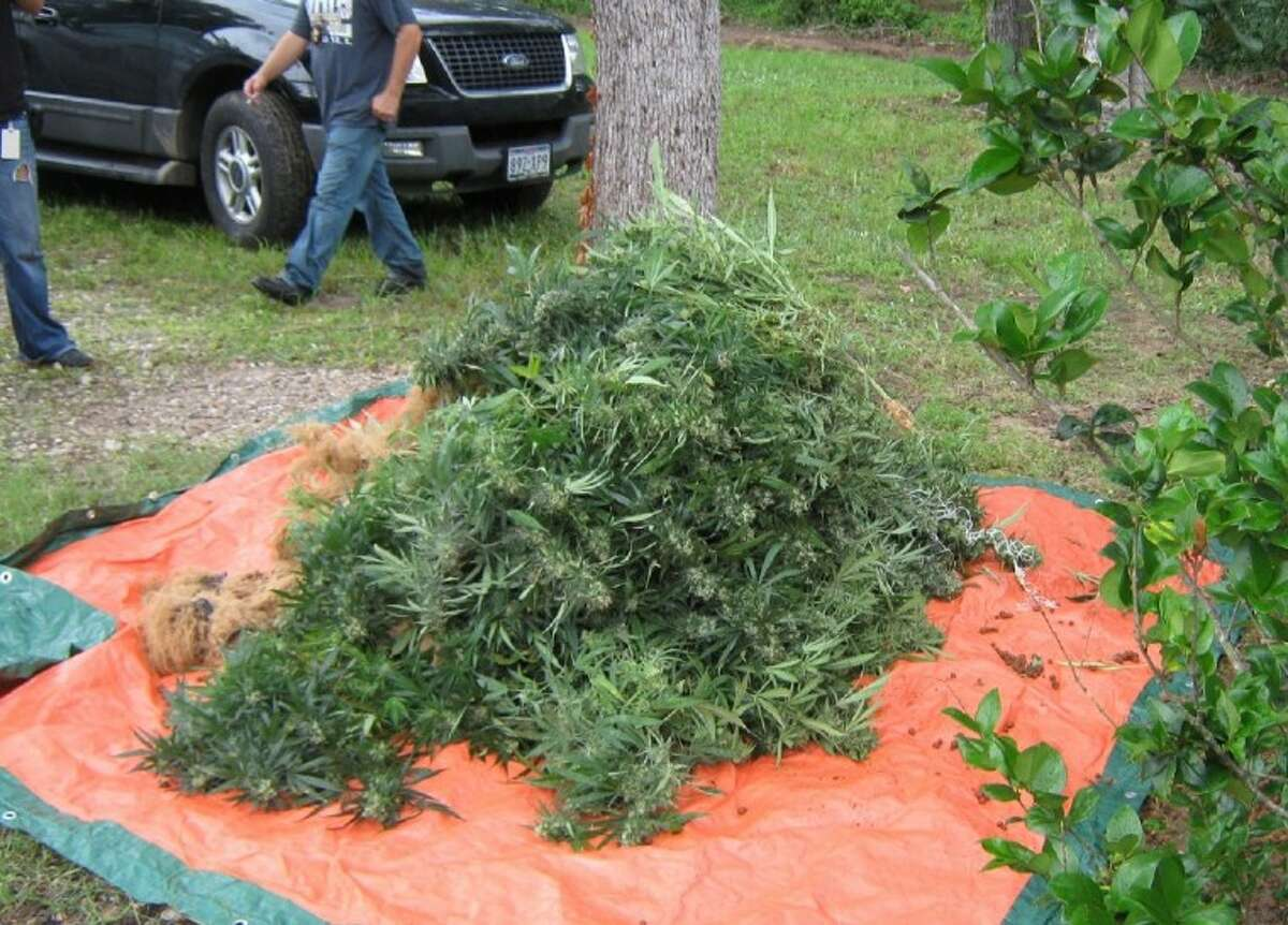 A large pile of hydroponic marijuana plants sits just outside a residence in Magnolia, where an elaborate growing operation was discovered by the Montgomery County Sheriff's Office Special Investigations Unit on Tuesday. A total of 238 marijuana plants were removed from the inside of the home.