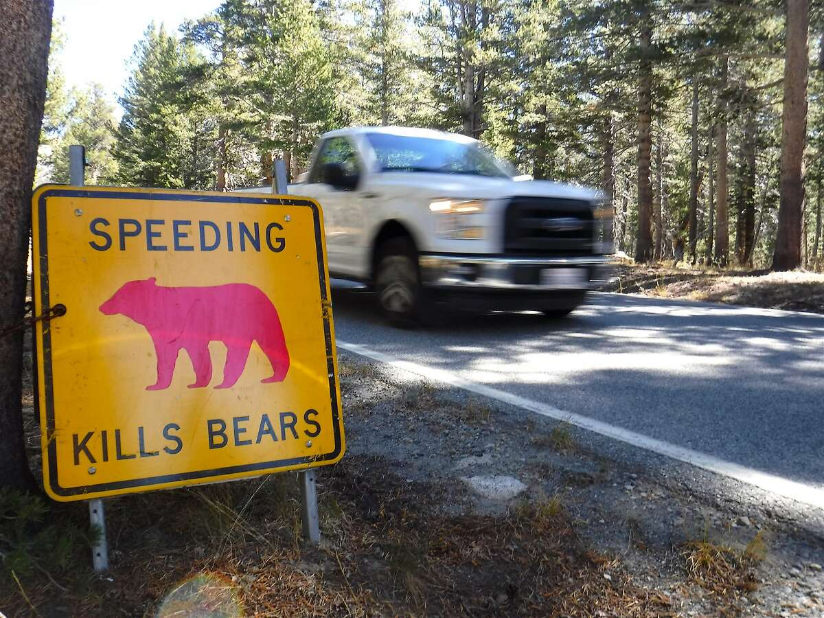A speeding truck passes a special sign to protect wildlife, Speeding Kills Bears, near Tuolumne Meadows at Yosemite National Park. Last year, vehicles hit 37 bears in Yosemite, and this past summer, 20.