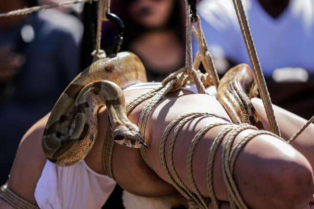 A snake slithered across the body of a woman who was wrapped in ropes and hanging from an apparatus, at the Folsom Street Fair in San Francisco, California, on Sunday, Sept. 25, 2016.