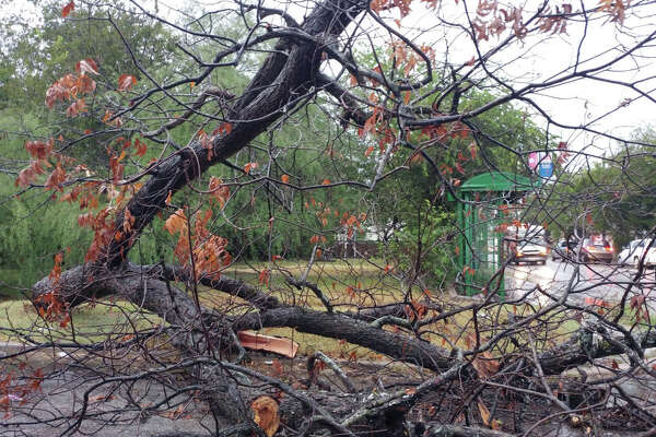 A fallen tree blocks part of the road Monday, September 26, 2016, after overnight storms swept through the San Antonio area.