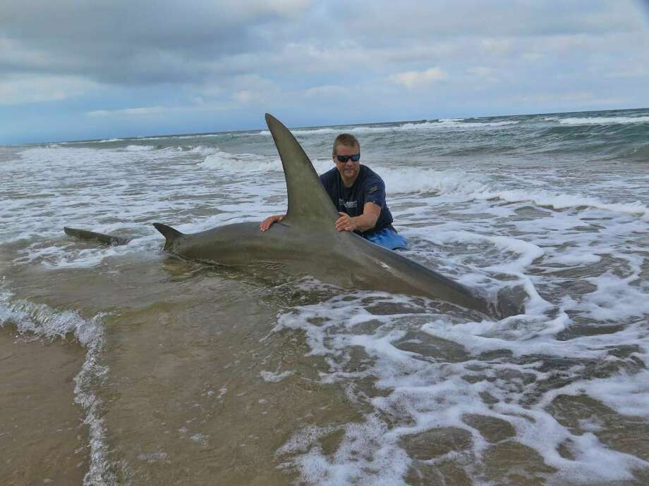 Corpus Christi resident Eric Ozolins caught this massive 13-foot-long greater hammerhead shark on the weekend of June 4, 2016. Photo: Photo: Courtesy/Eric Ozolins Via San Antonio Express-News