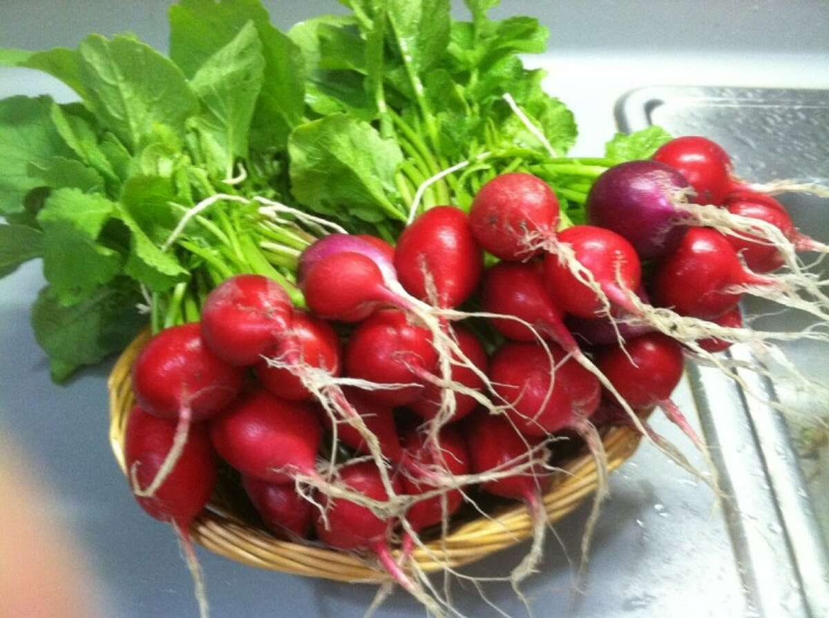 Radishes do well this time of year in our area as they can handle some cold.