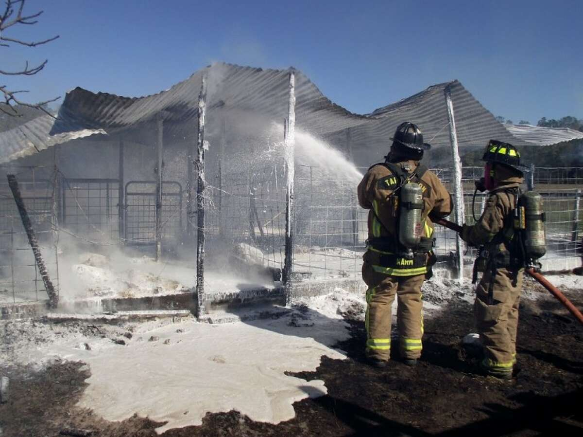 Tarkington firefighters extinguish a barn fire on CR 3011 off of Carter Loop early Tuesday afternoon, Jan. 3. Five show pigs perished in the blaze. TVFD Fire Chief Paul Gregory said the cause of the fire may have been a heat lamp.