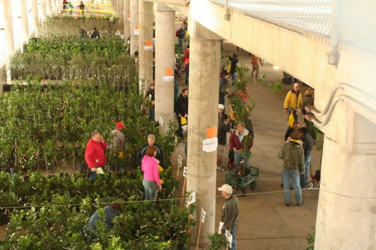Urban Harvest will host the 12th Annual Urban Harvest Fruit Tree Sale on Saturday, Jan. 14. It's at the University of Houston Robertson Football Stadium.