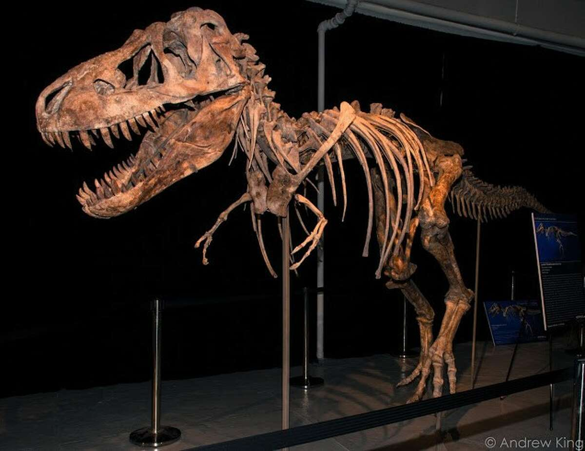 Painter halted the transfer of a Tyrannosaurus skeleton at an auction in New York.
