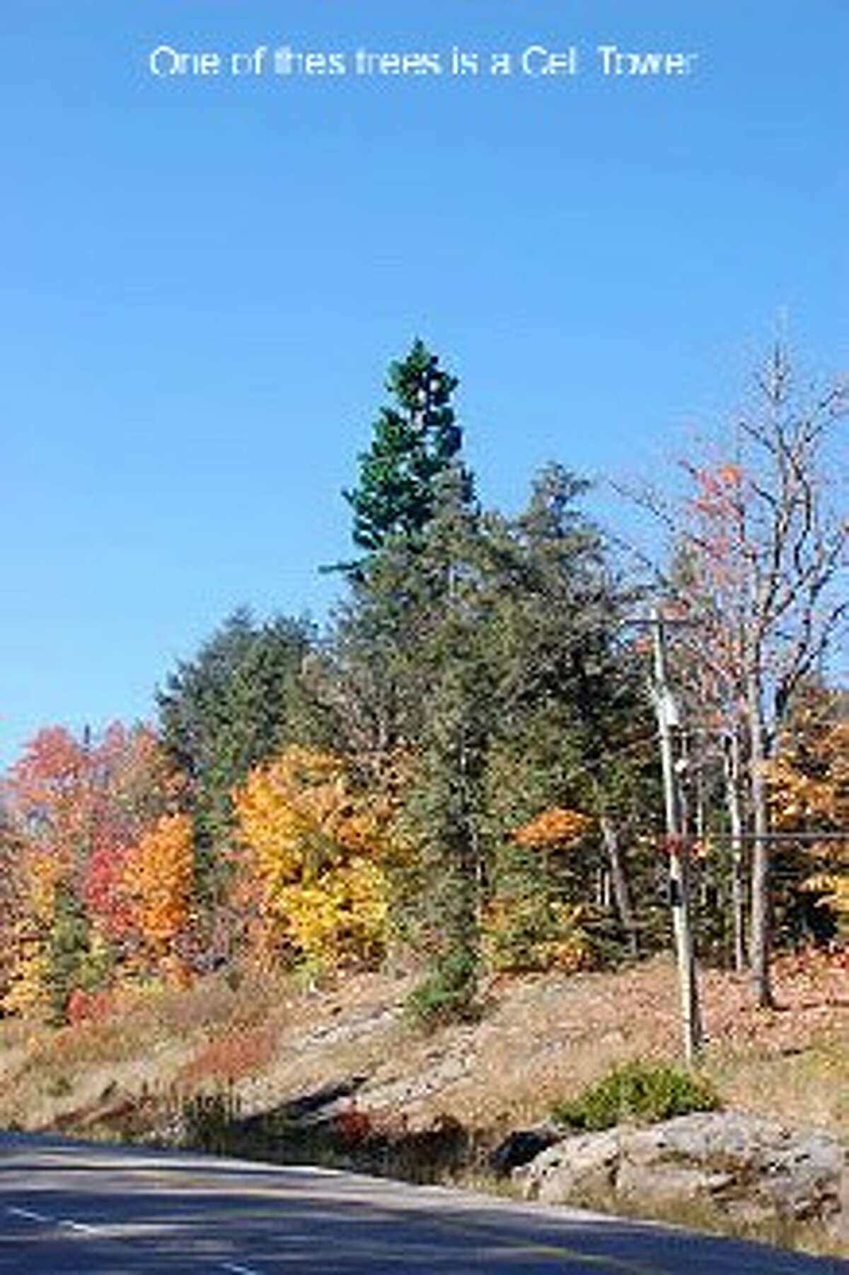 A camouflaged cell phone tower is hard to discern among the trees.