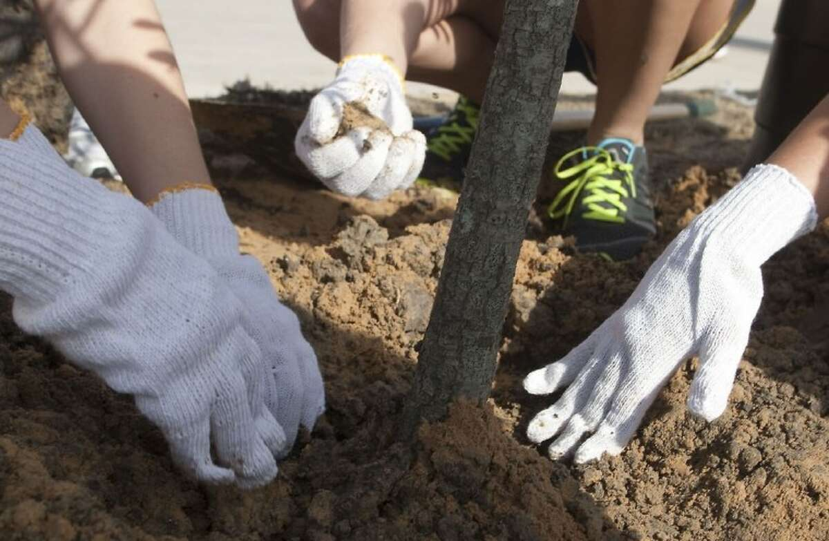 Students from St. Agnes Academy plant trees around the athletic field complex on Saturday.