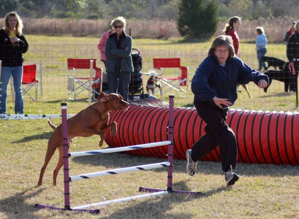 Connie Foland directs her dog, a vizsla named Mick, Saturday as he jumps an obstacle during a standard agility run. Dickinson-based For Dogs Only and the dog agility club A!Woof hosted agility trials for the venue Canine Performance Events at their facility in the Dickinson/Alvin area. Competitors ranged from local dog enthusiasts to competitors from Louisiana.