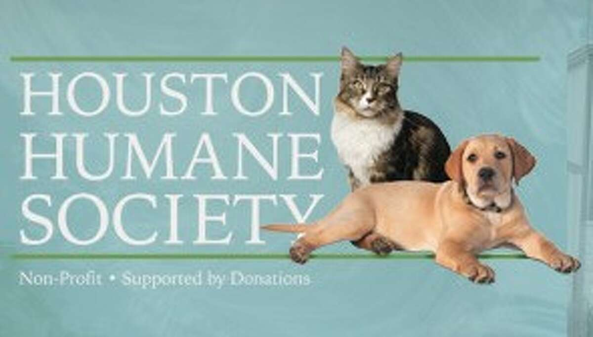 Keep your pets safe from high water with Houston Humane Society tips
