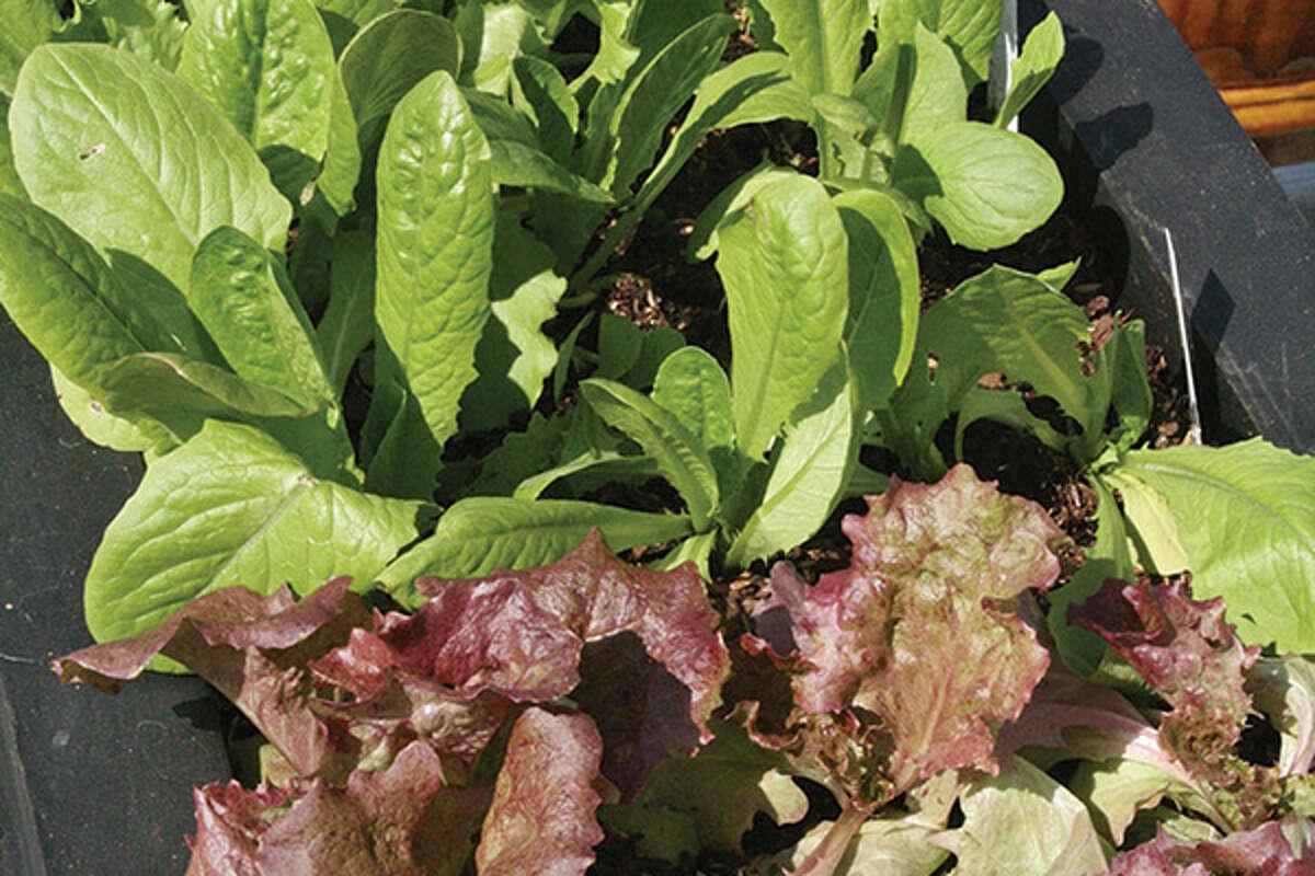 USDA Announces START2FARM.GOV to Support America's Future Farming Generations.