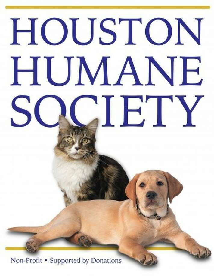 (Photo from www.facebook.com/pages/Houston-Humane-Society/78299858970)