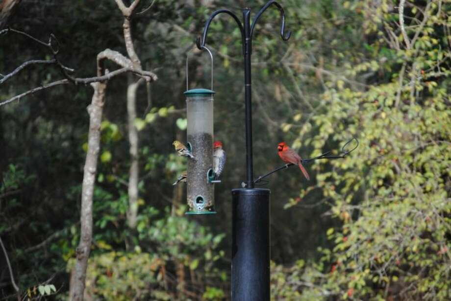 Cardinals, woodpeckers and goldfinches are some of the various species that can be observed at the Edith L. Moore Nature Sanctuary.