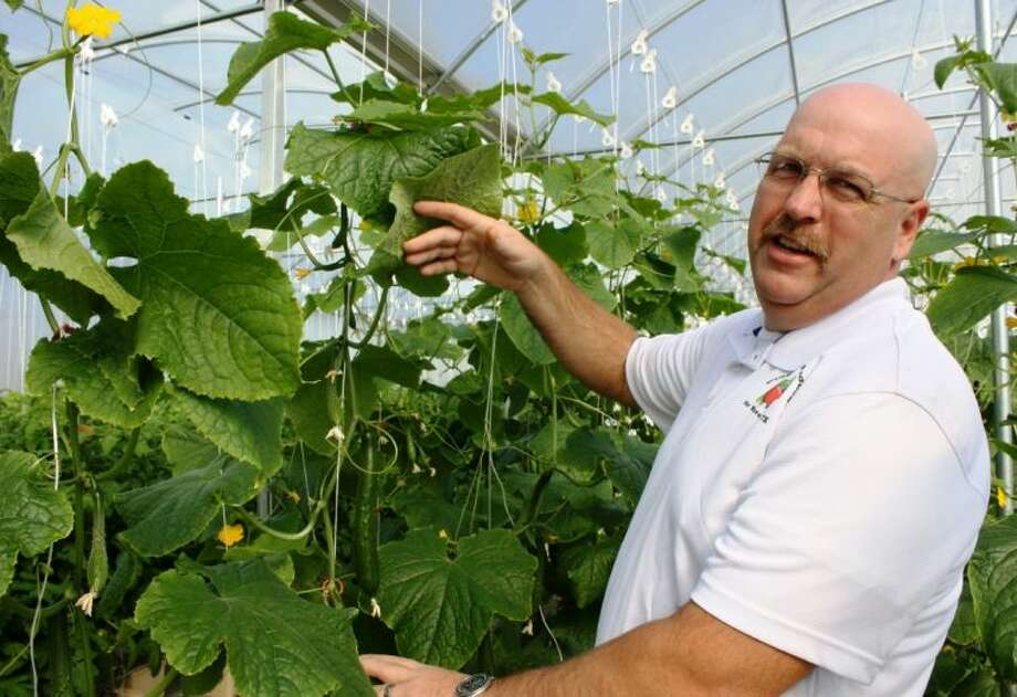 Jon Hughes, of Pine Valley Produce, shows off some of his cucumbers that he grew in his hydroponic greenhouse. He hopes to sell the fruits and vegetables to high-end restaurants and markets in the Houston area. Photo: MELECIO FRANCO