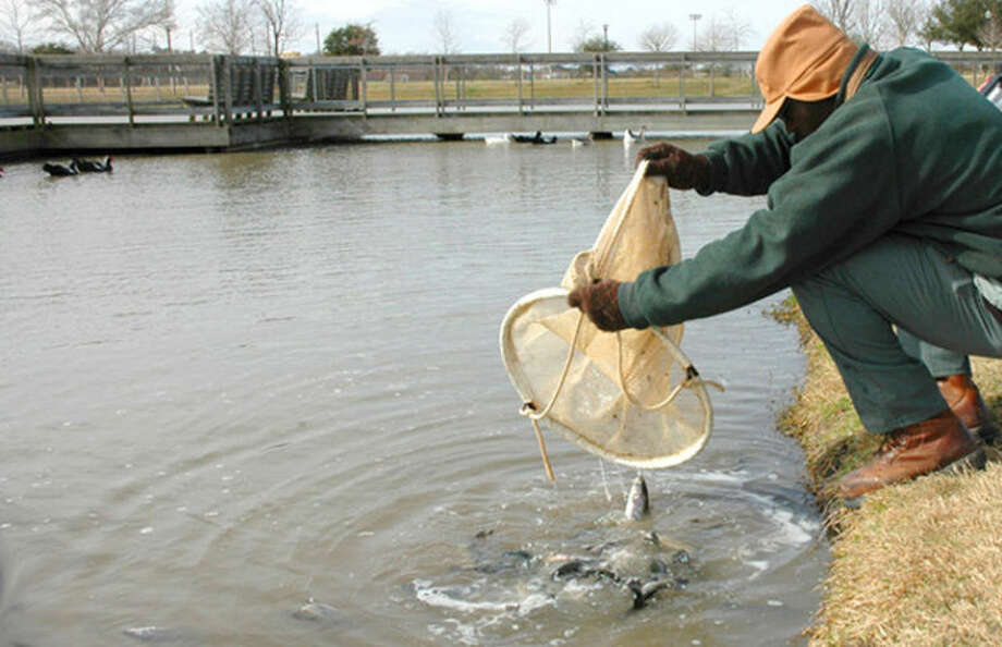 The Texas Parks and Wildlife Department will stock the lake at Eldridge Park with 500 rainbow trout on Wednesday, Jan. 30, adding to the bass, catfish and perch that have been stocked in the past. Trout are a cold-water fish that thrive when temperatures drop. Photo: Submitted Photo