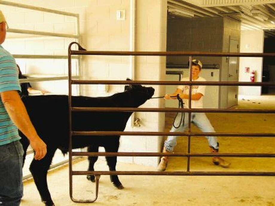 Landon Folkerts leads his brother Hudson's steer, Cash, into the agriculture barn at Tomball High School. Landon continued Hudson's FFA project following his tragic death last year.