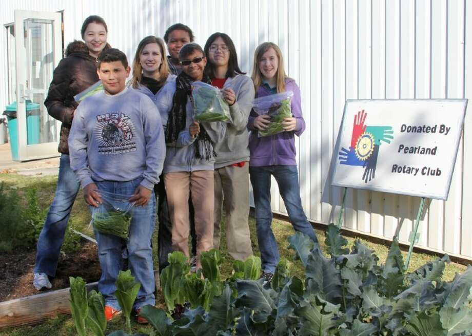 Pearland Junior High West students harvest lettuce in a campus garden funded by the Pearland Rotary Club. Pictured are (from left) Angela Shipman, Ramiro Guerra, teacher Amanda Lucas, Koko Achife, Raelyn Poe, Tiffany Nguyen and Brooke Dowler. Photo: Pearland ISD