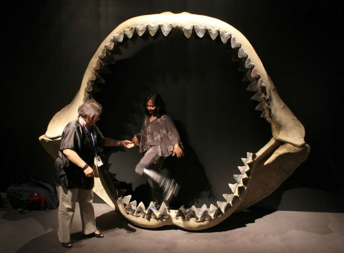 Houston Museum of Natural Science staff walk out of the jaws of the Megalodon