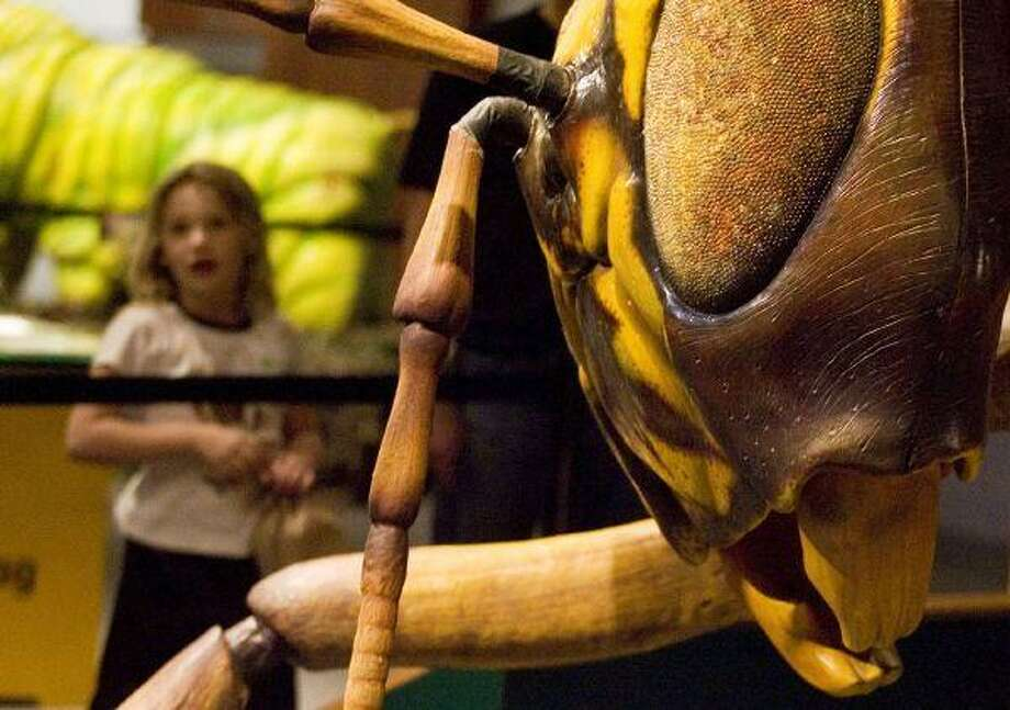 """Seven-year-old Kaia Luik stares at a giant wasp at the new """"Backyard Monsters"""" exhibit at The Health Museum in Houston. (photo by Patric Schneider)"""