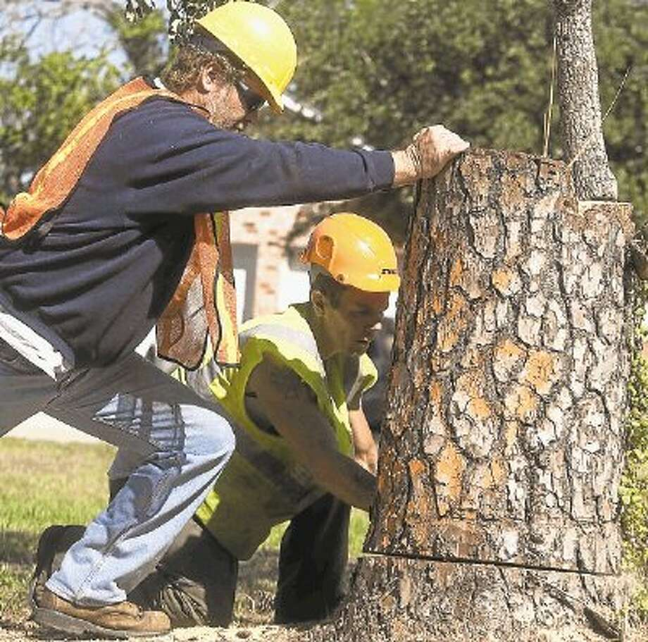 File photoContractors remove dead trees from Houston property. The city had to contract to get rid of hazardous trees from parks and other public lands. / @WireImgId=2534570