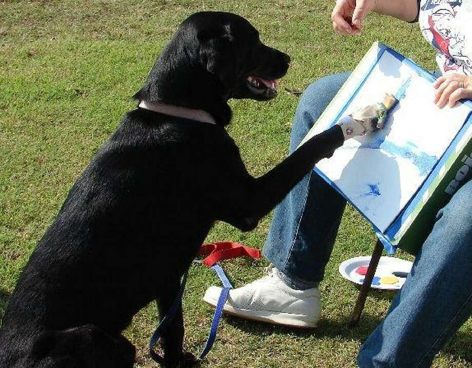 Misha the dog paints her latest masterpiece. Misha will be at the fifth annual AABY Afternoon of the Arts April 26 at Kings Harbor.