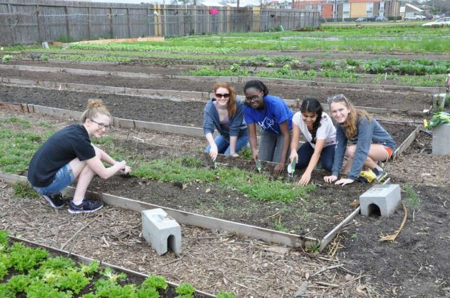Students at Carnegie got their hands and knees dirty while working in the garden at the non-profit, Plant it Forward Farms.