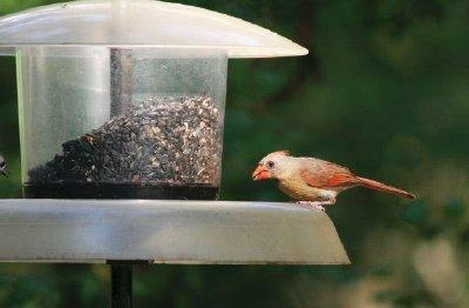 Photo: Houston Arboretum & Nature Cente / Houston Arboretum & Nature Center