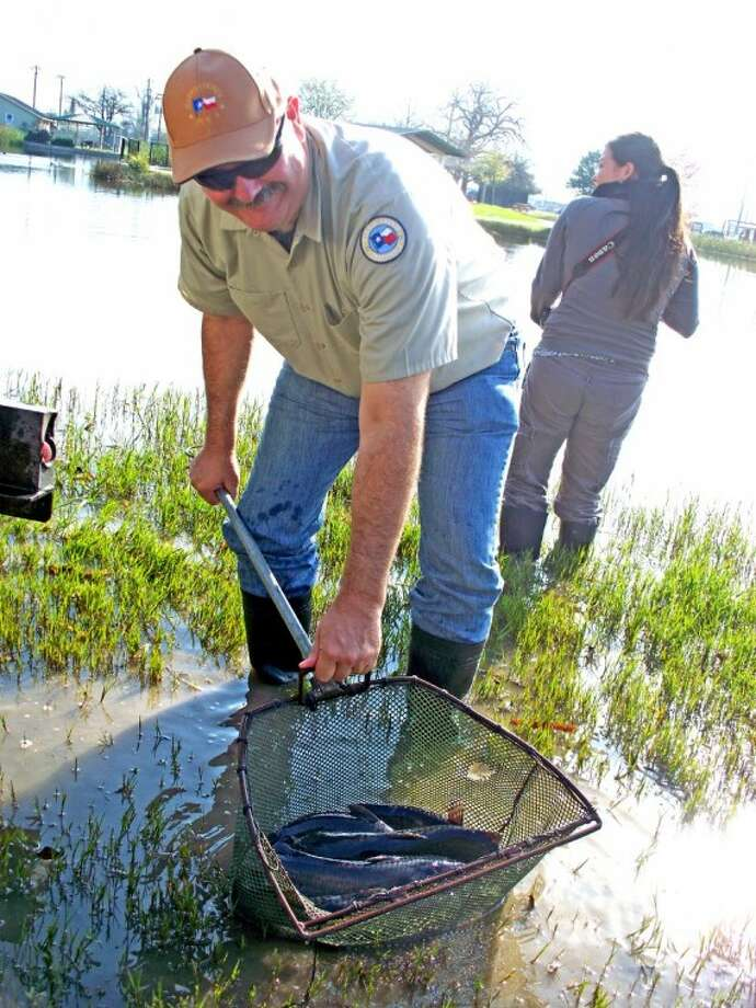 Cagle helps release 400 catfish and 100 bass into Bane Park Lake.
