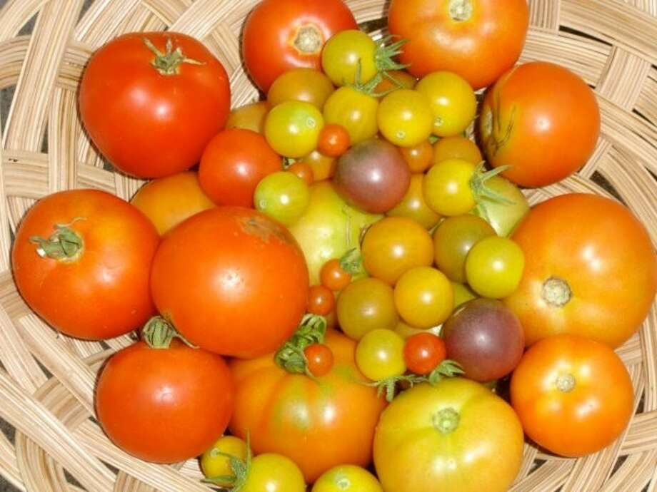 Various tomatoes grown in the area.