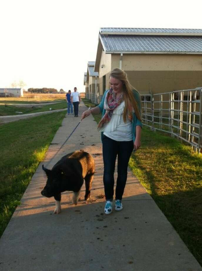 "Lauren Jones walking her pig, ""Pierre,"" which she will show at Katy ISD FFA Livestock Show & Rodeo. Photo: Firethorne"