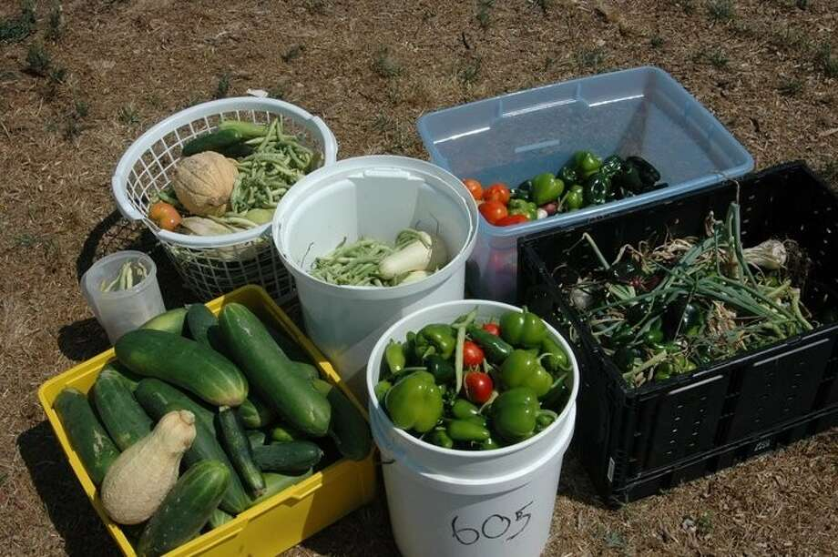 One hundred pounds of vegetables from the community garden. Photo: SUBMITTED PHOTO