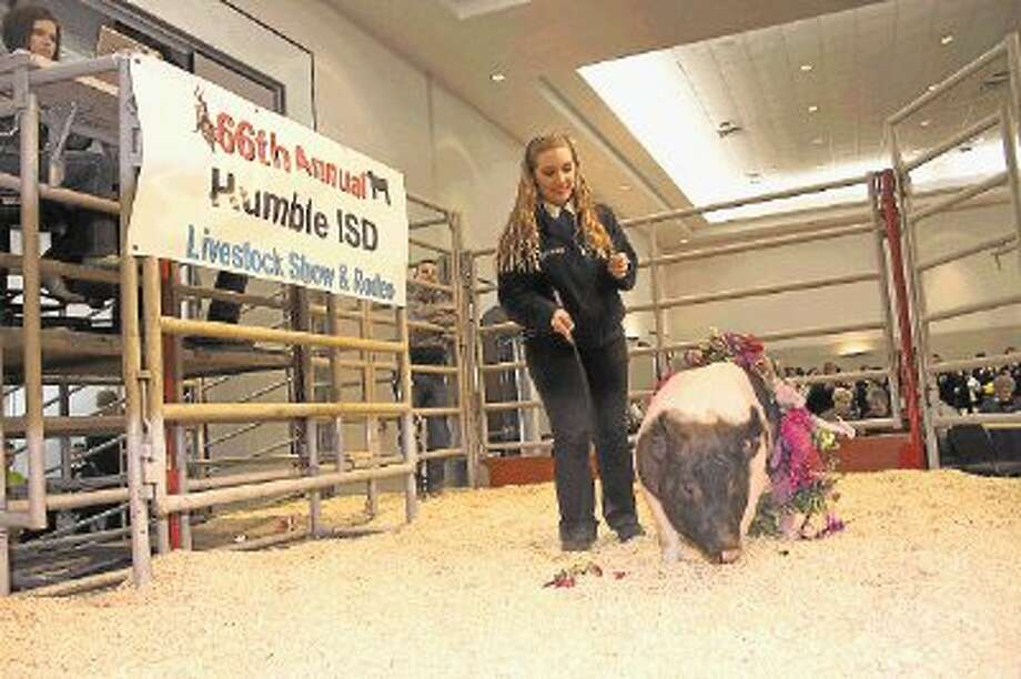 In total, the 2013 Humble ISD Livestock Show brought in $202,000. Summer Creek High School junior Kendall White walks her swine which sold for $1,500 at the 2013 Humble ISD Livestock Show. The Livestock Show helps students obtain money for college and post secondary training, and assists students in continuing their program involving raising animals. / @WireImgId=2615321
