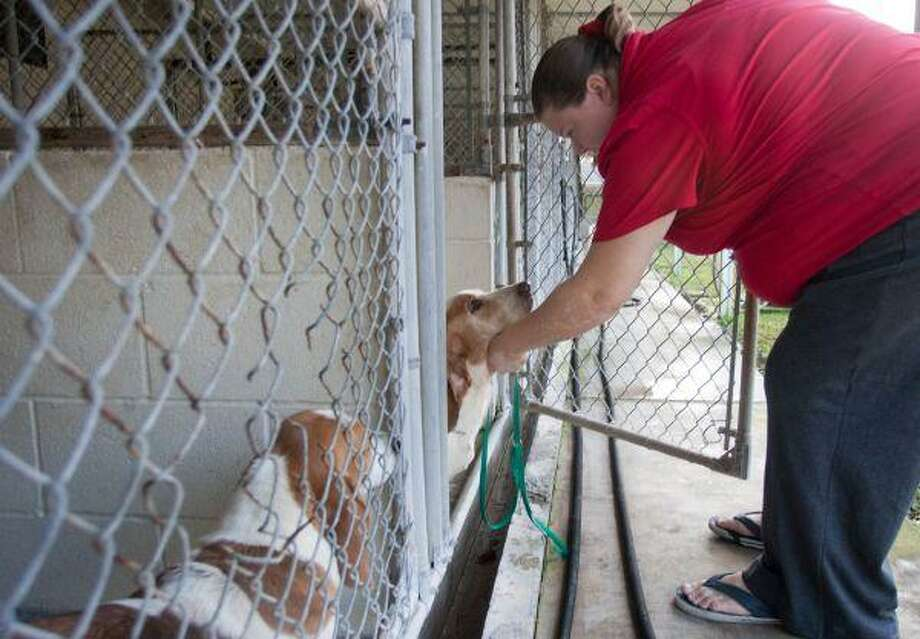 Elkin Kennels office manager Jessica Turner pets Beauford, a pure bred basset hound. Officials with Dakota Rescue, a canine support group that helps care and rehabilitate rescued dogs, are looking for permanent and temporary homes for 30 purebred basset hounds recently removed from a Montgomery County puppy mill. / The Courier