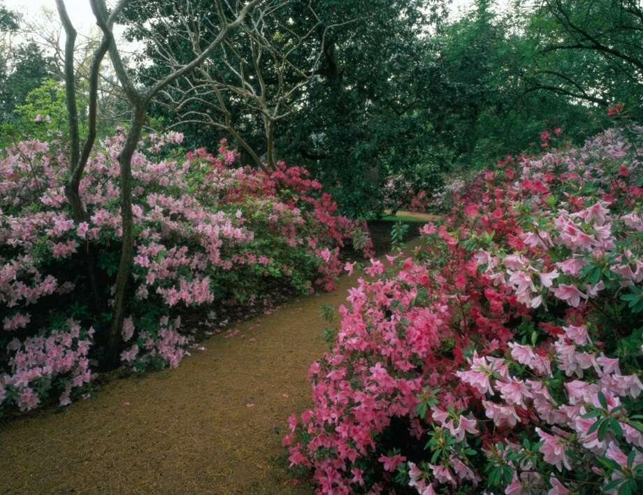 Rienzi and Bayou Bend open their grounds for a two-day spring affair of home and gardens tours. Enjoy visiting these historic sites during Houston's most beautiful time of the year.