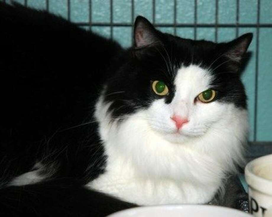 Thomas is looking for a new home. For more information, call 281-290-0121.