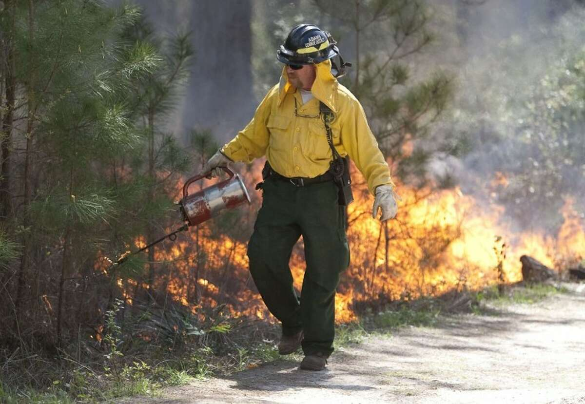 A Texas Forest Service firefighter uses a drip torch to ignite a prescribed burn in the W.G. Jones State Forest on Monday. The burns are expected to be completed Tuesday.