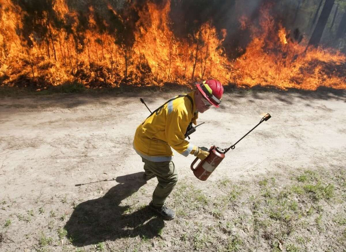 A Texas Forest Service firefighter ducks away from a fire line during a prescribed burn in the W.G. Jones State Forest Monday. The burns are expected to be completed Tuesday.