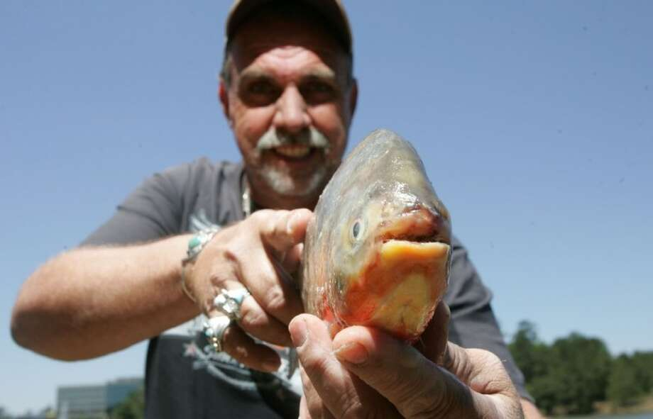 Spring man fishing lake woodlands may have caught south for Fishing in houston