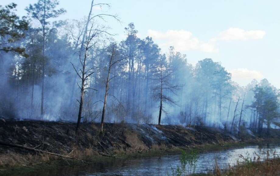 A fire in Continental Parkway turned into a forest fire with wind and dry conditions. The fire spread from the road and ended at this drainage ditch filled with water.