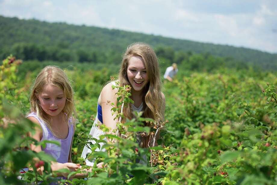 Go fruit pickingEveryone goes apple picking in the fall,  but summer yields its own fruit ripe for the picking, literally. There  are plenty of farms in Connecticut where you can pick your own summer  fruits. Find out when and where. Photo: Kim Tyler