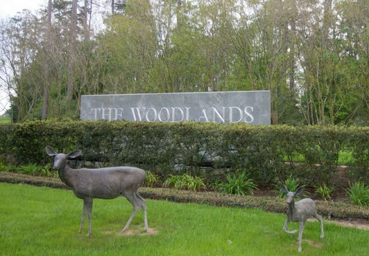 Bronze deer statues decorate the entrance to The Woodlands at the intersection of Texas 242 and FM 1488. Two of the bronze statues recently were stolen - one from the location at Texas 242 and FM 1488 and another at Creekside Forest Drive and Gosling Road.