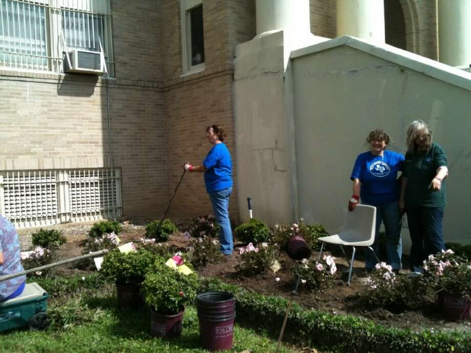 Volunteers helped transplant Encore Azaleas on the north side of the San Jacinto County Courthouse Monday, March 19. Shown from left to right: Debbi Goodale, Karla Fratt and Sandy McDonough. SJC Master Gardener Gayle Erwin submitted the winning entry in Encore Azalea's City Restoration Contest, awarding $10,000 in plants to beautify the courthouse grounds. Photo: Submitted Photo