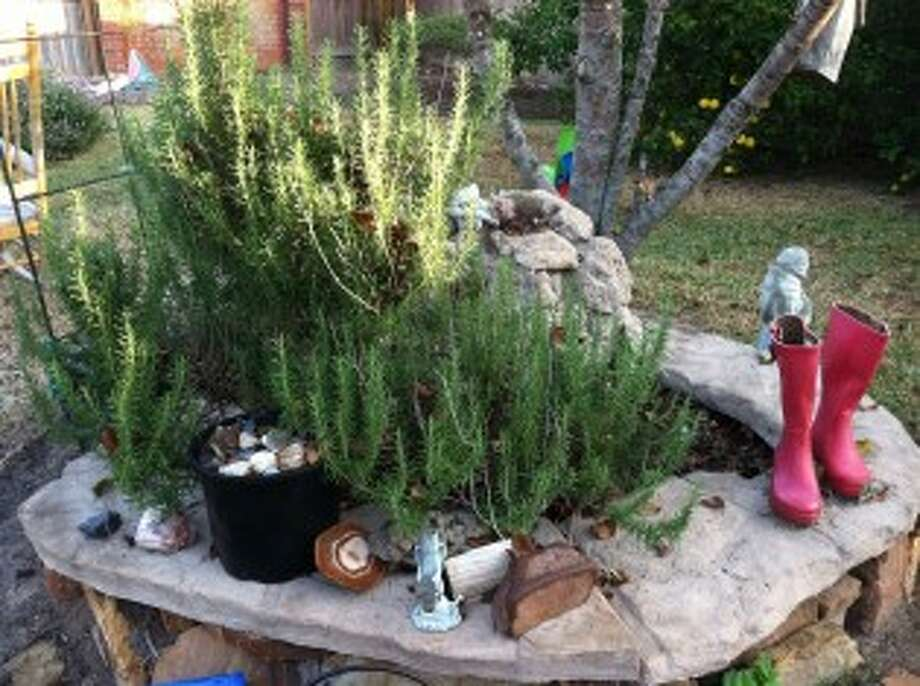 GumboSoil: Don't forget rosemary, the plant of remembrance