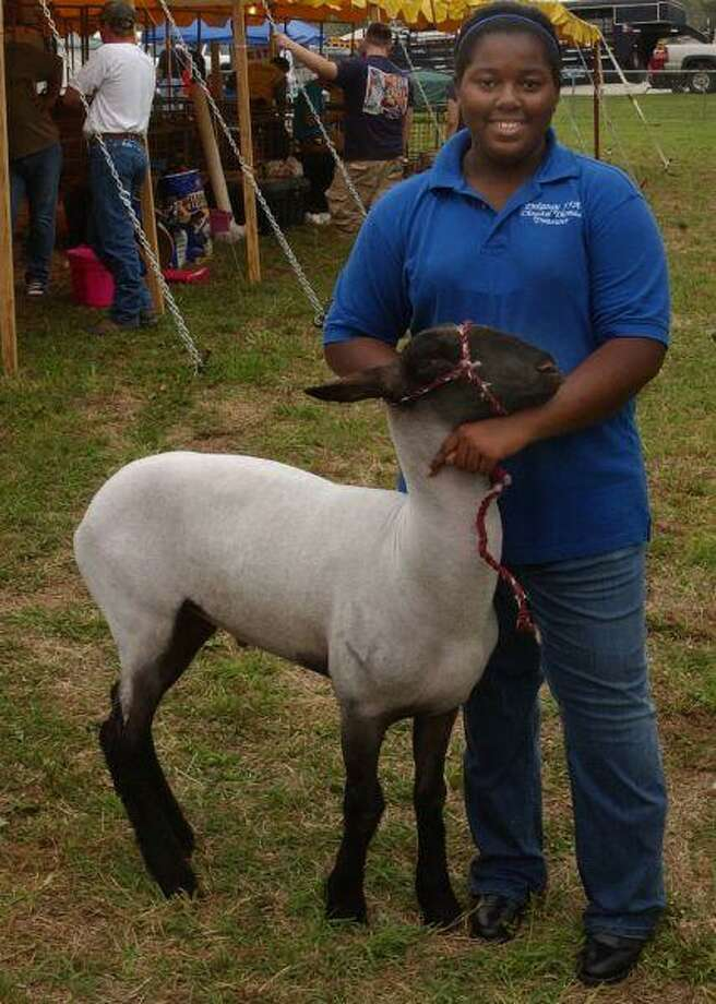 Dekaney High School student Chrystal Thomas competed in the lamb show at last year's Tri-Club Livestock Show and Sale.