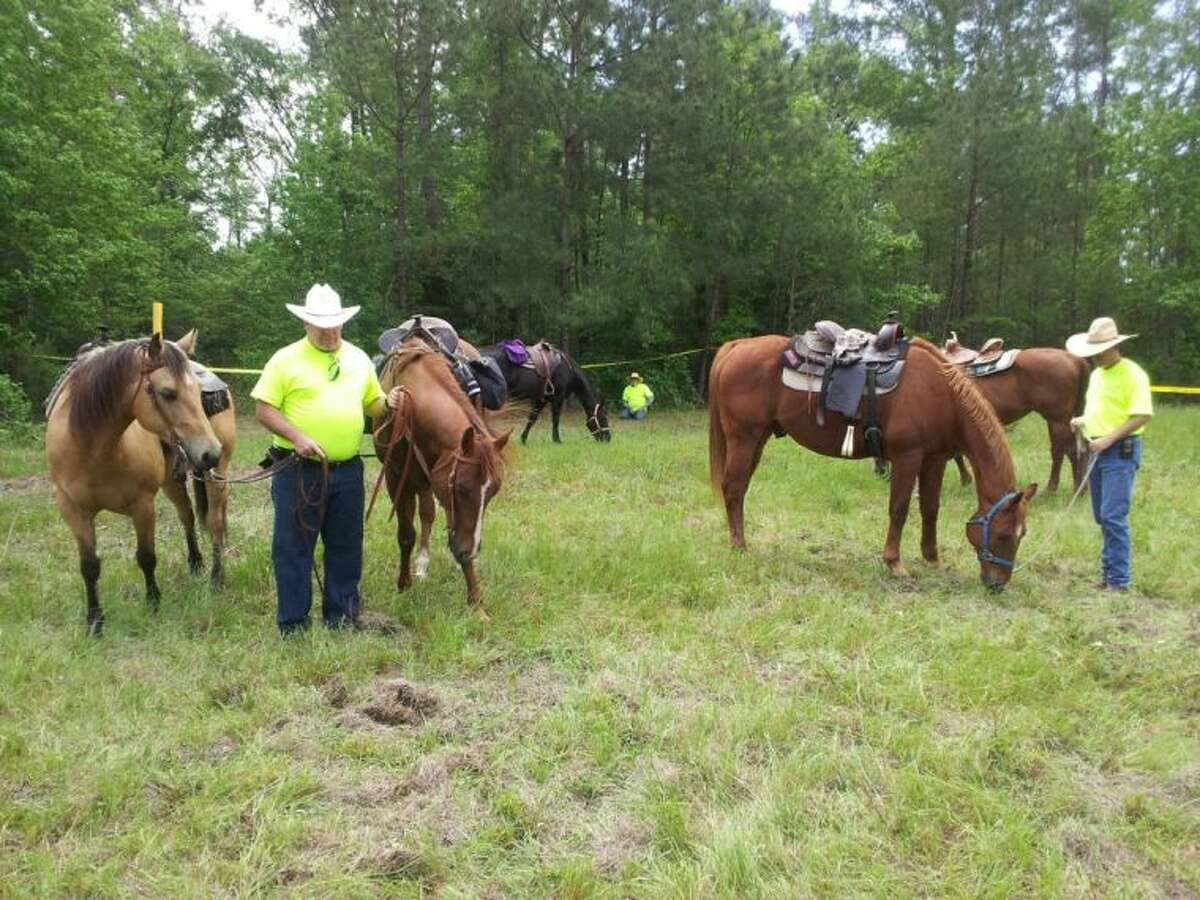 Texas EquuSearch volunteers let their horses rest after a long day of looking for more human remains on CR 332 south of Cleveland. Citizens riding four-wheelers found a skull and portions of vertebrae Thursday night. On Saturday, approximately 40 volunteers - some on foot and others on ATVs and horses - scoured the woods and grassy clearings in the hopes of finding more evidence to help law enforcement identify the remains.