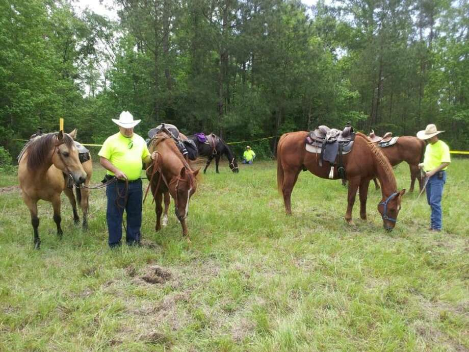 Texas EquuSearch volunteers let their horses rest after a long day of looking for more human remains on CR 332 south of Cleveland. Citizens riding four-wheelers found a skull and portions of vertebrae Thursday night. On Saturday, approximately 40 volunteers — some on foot and others on ATVs and horses — scoured the woods and grassy clearings in the hopes of finding more evidence to help law enforcement identify the remains. Photo: RACHEL HALL