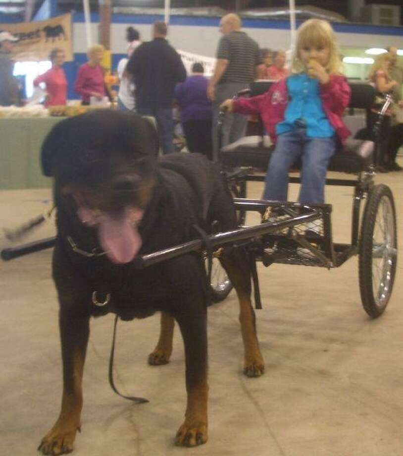 Last year's event featured a number of fun things for families to enjoy while getting aid or adopting a new pet. Carriage rides were popular among the kids.