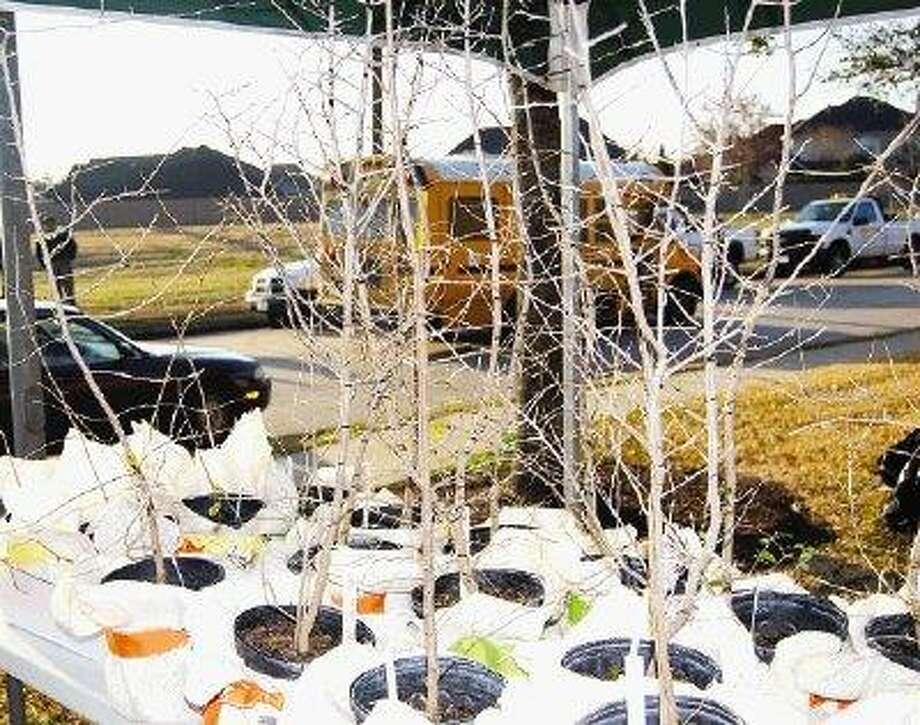 Freedom Tree Seedlings / @WireImgId=1203399