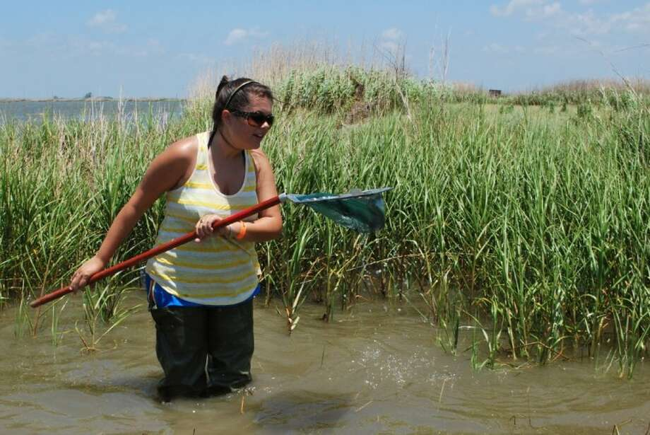 Lamar University student Hilary Allen inspects her catch of grass shrimp in her dip net. Photo: Submitted Photo