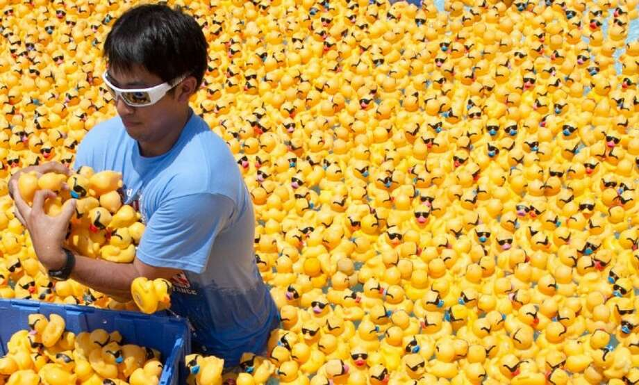 A volunteer grabs an armful of yellow rubber ducks at Rob Fleming Aquatic Center during last year's Great Red, White & Blue Duck Race in The Woodlands. This year, more than 8,000 ducks will be used to help raise funds for Montgomery County Emergency Assistance.